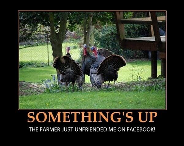 thanksgiving memes - 2